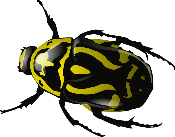 Bugs clipart invertebrate Bug Insect free Insect clipart