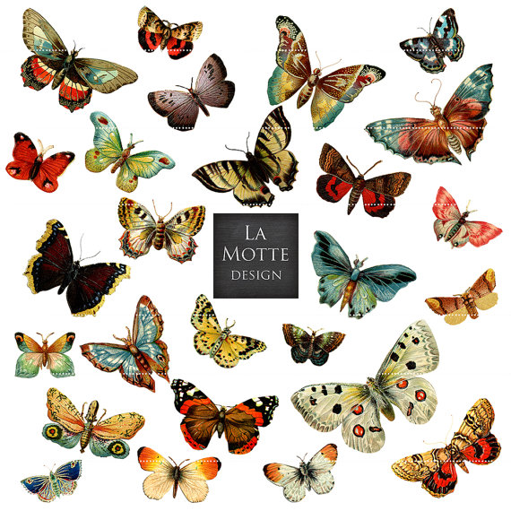 Moth clipart antique Scrap butterflies butterfly png vintage