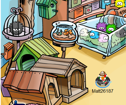 Inside clipart pet store For Scavenger  Penguin Ninja