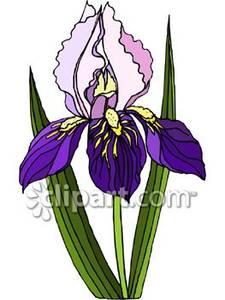 Iris clipart Flower Clipart Clipart Flower Download