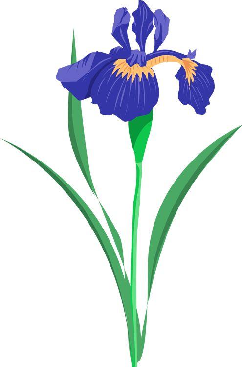 Iris clipart Fans Iris flower 136 #1