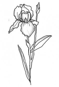 Iris clipart black and white #1