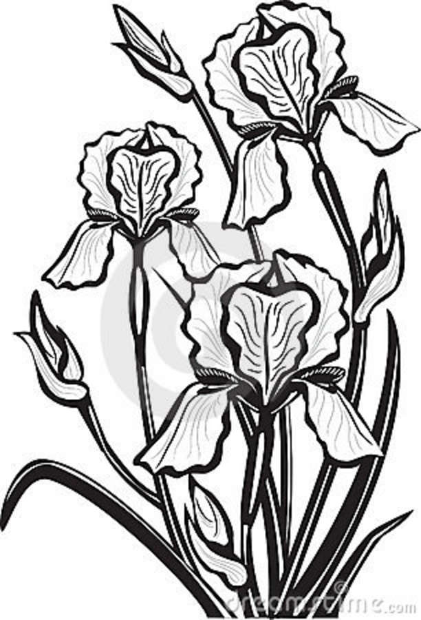 Iris clipart black and white #8