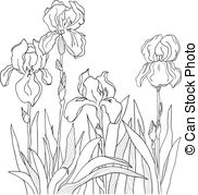 Iris clipart black and white #7