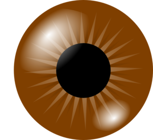 Brown Eyes clipart eys Art Clker at Eye Clip