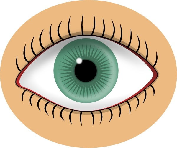 Eyeball clipart owl eyes Free clip Free vector (69