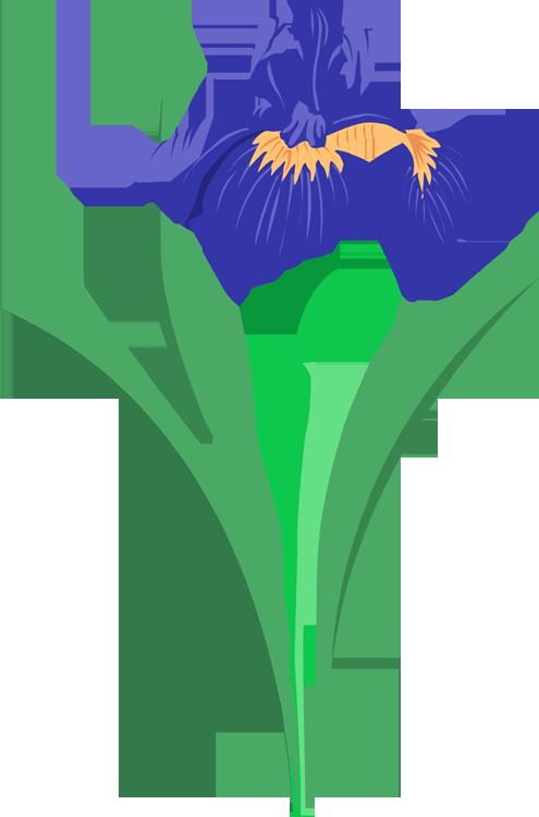 Purple Rose clipart iris Summer Art Flower Grab Art