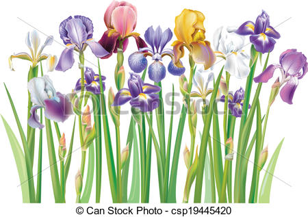 Iris clipart iris flower Flower Flower Download Purple Art