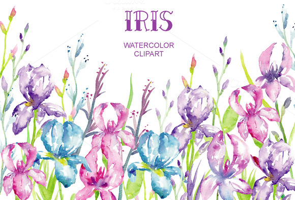 Iris clipart spring flower Fans clipart flower flower iris