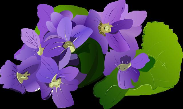 Iris clipart violet Fans Iris #4 #65 clip