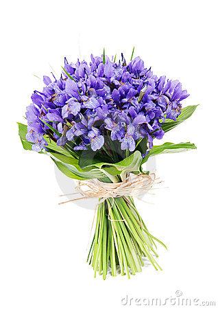 Iris clipart violet Clipart Iris iris #10 flower