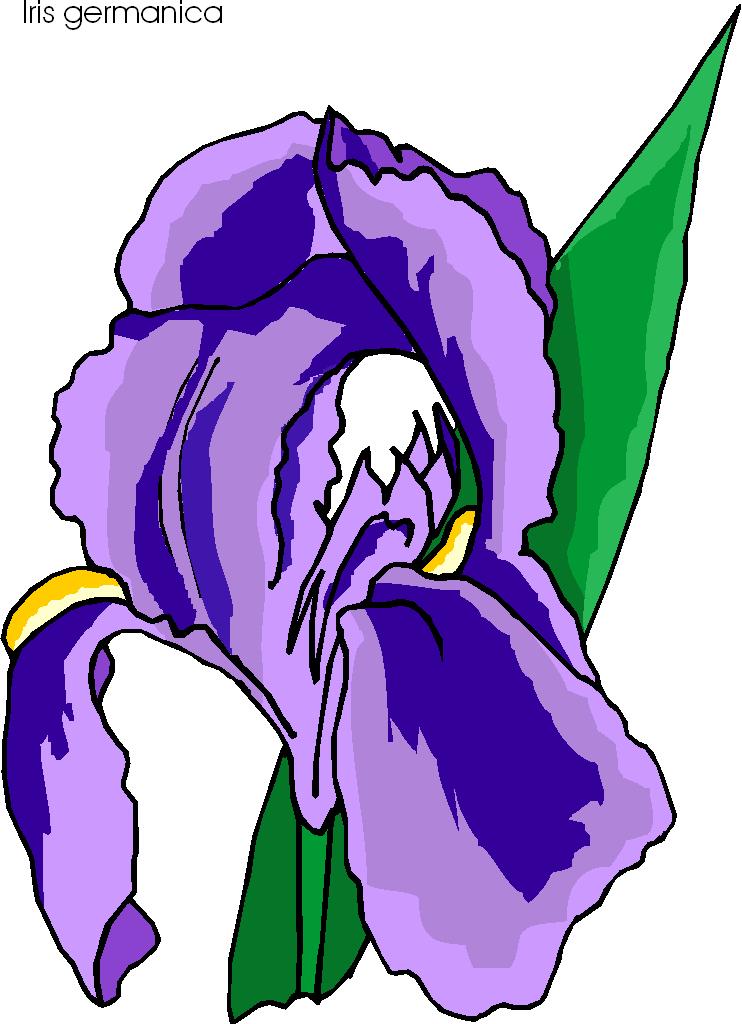 Iris clipart violet Panda Images Ferocity Free Clipart