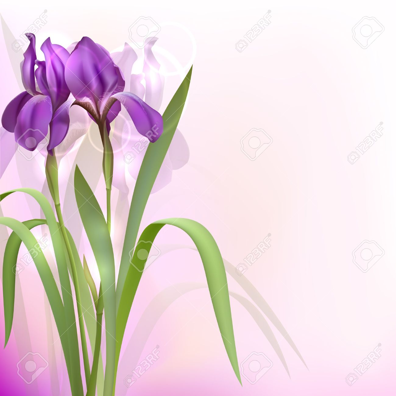 Iris clipart violet Clipart Iris iris #1 flower