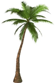 Tree clipart high resolution Clipart clipart tree internet Palm