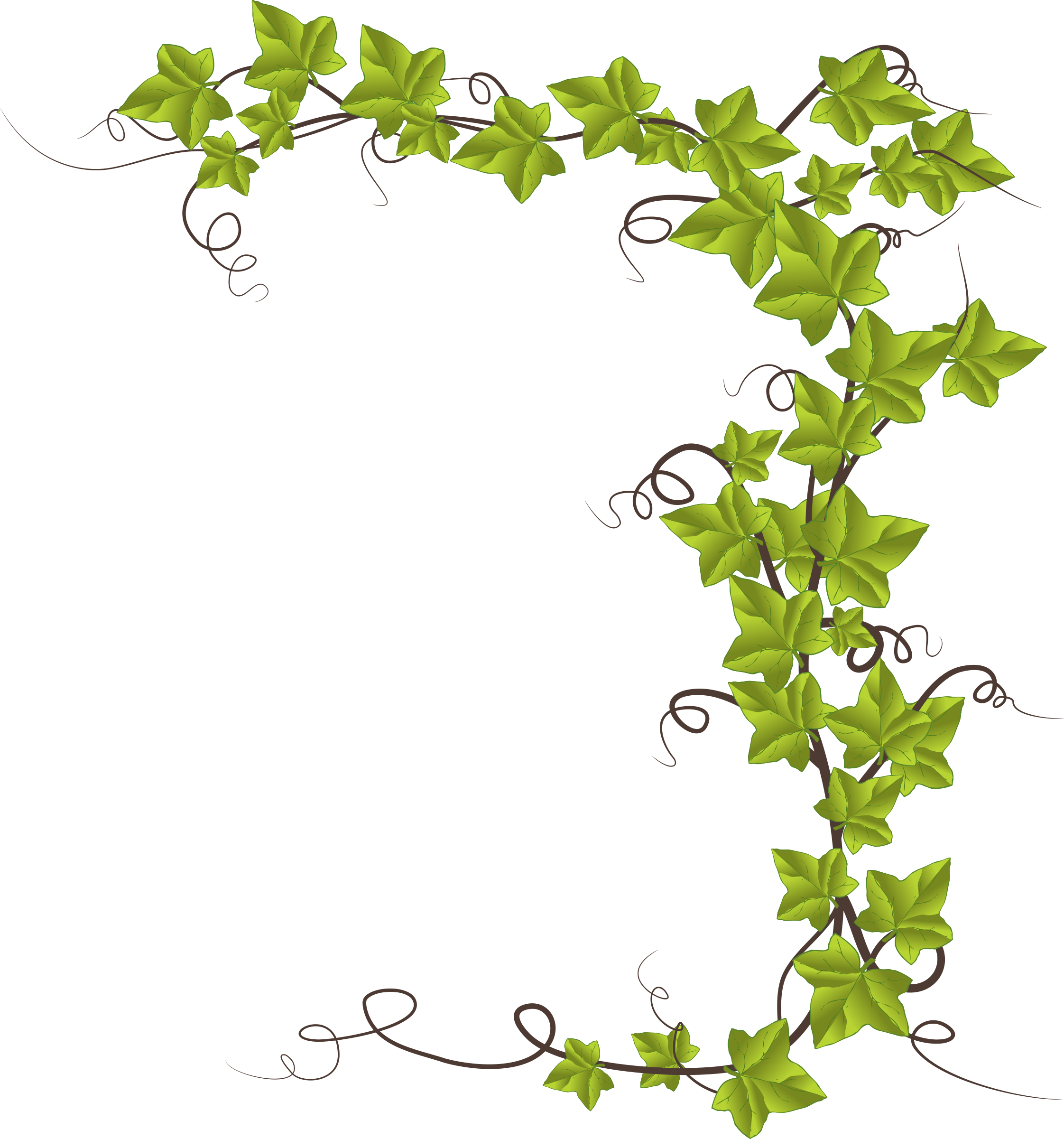 Ivy clipart Clipart Ivy Ivy