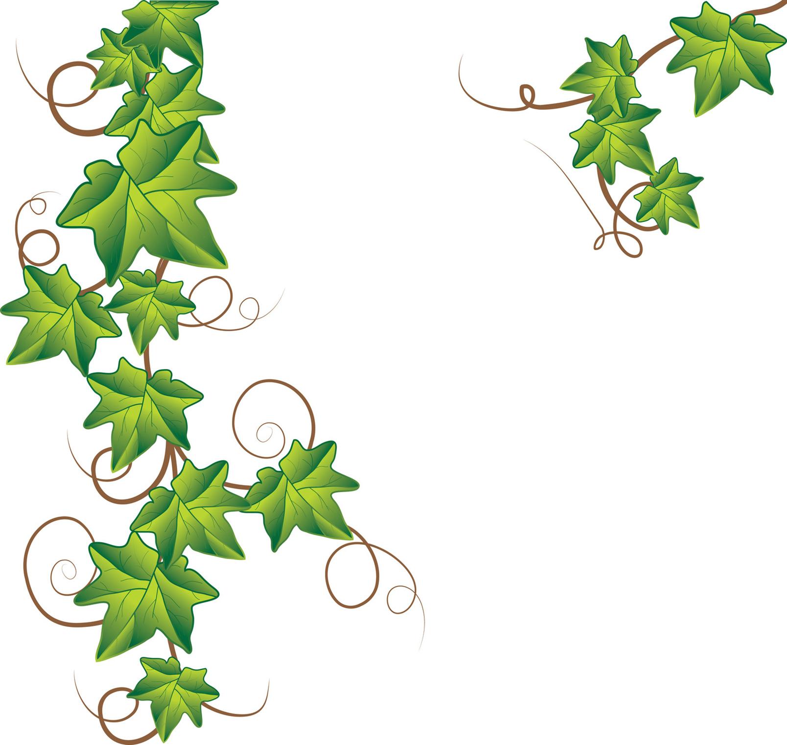 Drawn ivy branch Vector  vector royalty image