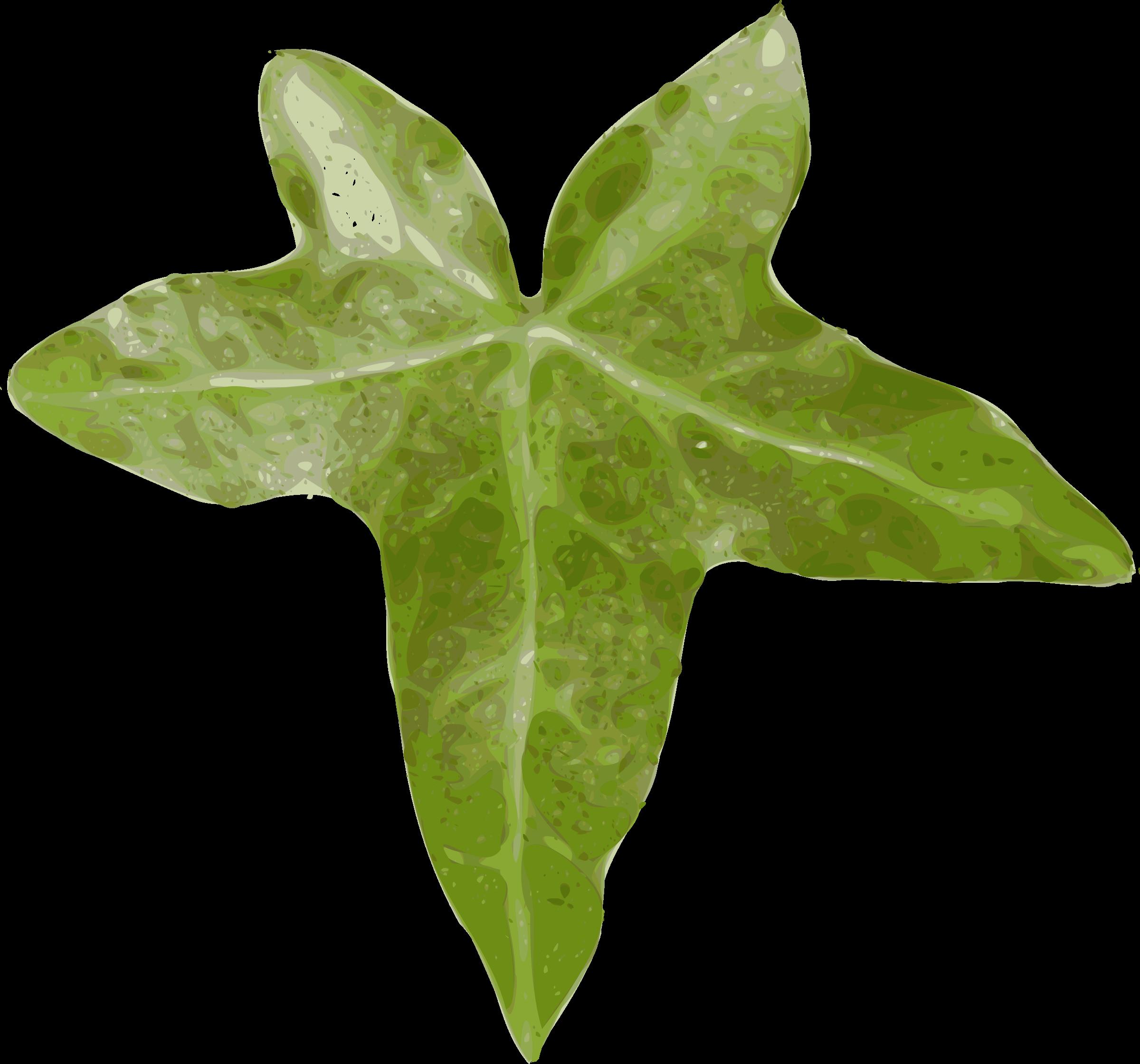 Ivy clipart big leaf Clipart (PNG) BIG IMAGE leaf