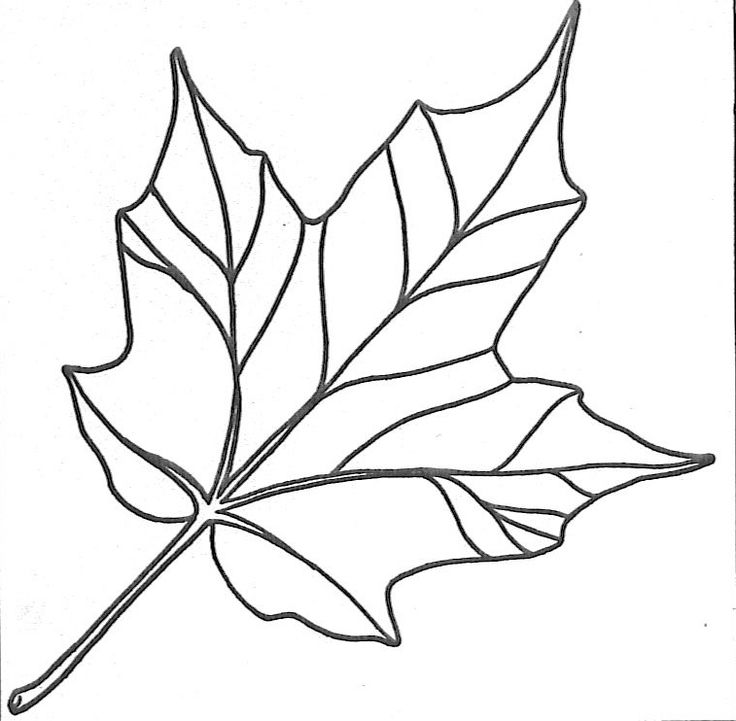 Ivy clipart big leaf Bestofcoloring 18439 maple printable leaf