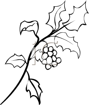 Black clipart holly White Holly leaves All Clip