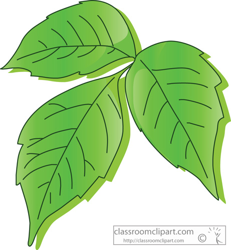 Ivy clipart cartoon #7