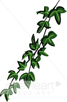 Ivy clipart cartoon #10