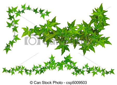 Ivy clipart line Tendril Ivy of part Drawings