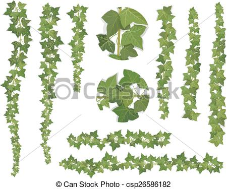 Drawn ivy branch Branches of  Vector vine