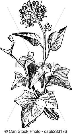 Ivy clipart vintage Ivy Ivy vintage sp Ivy