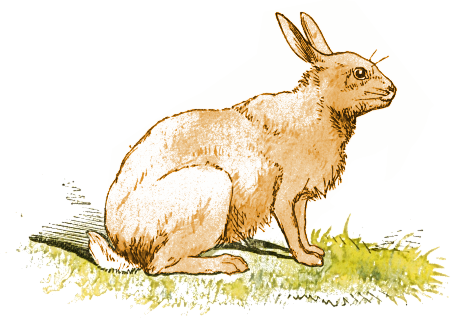 Rabbit clipart wild rabbit #1