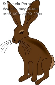 Jack Rabbit clipart Art Art of Jack Illustration
