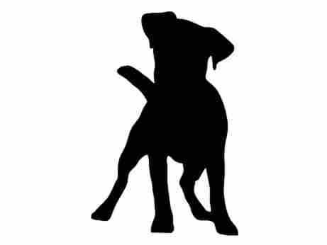 Jack Russell Terrier clipart Jack Russell Jack Terrier Decal