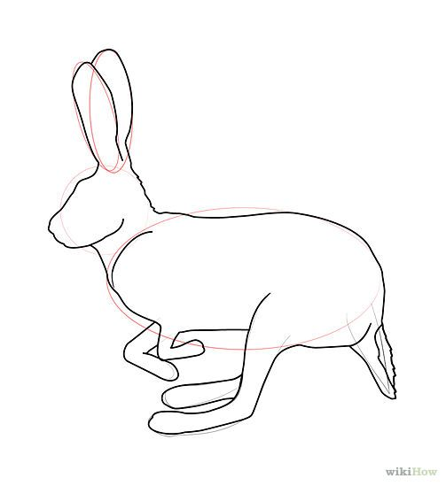 Drawn rabbit hare To and 1233 a rabbit