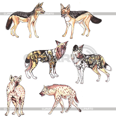 Wild Dog clipart Hyena Clipart / illustrations EPS raster Crocuta