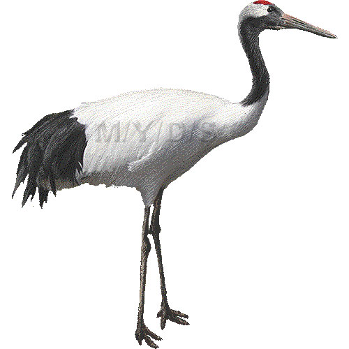 Sandhill Crane clipart japanese crane #8
