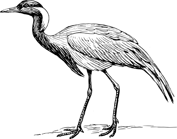 Brds clipart blue crane Photo#15 Crane Line Drawing drawing