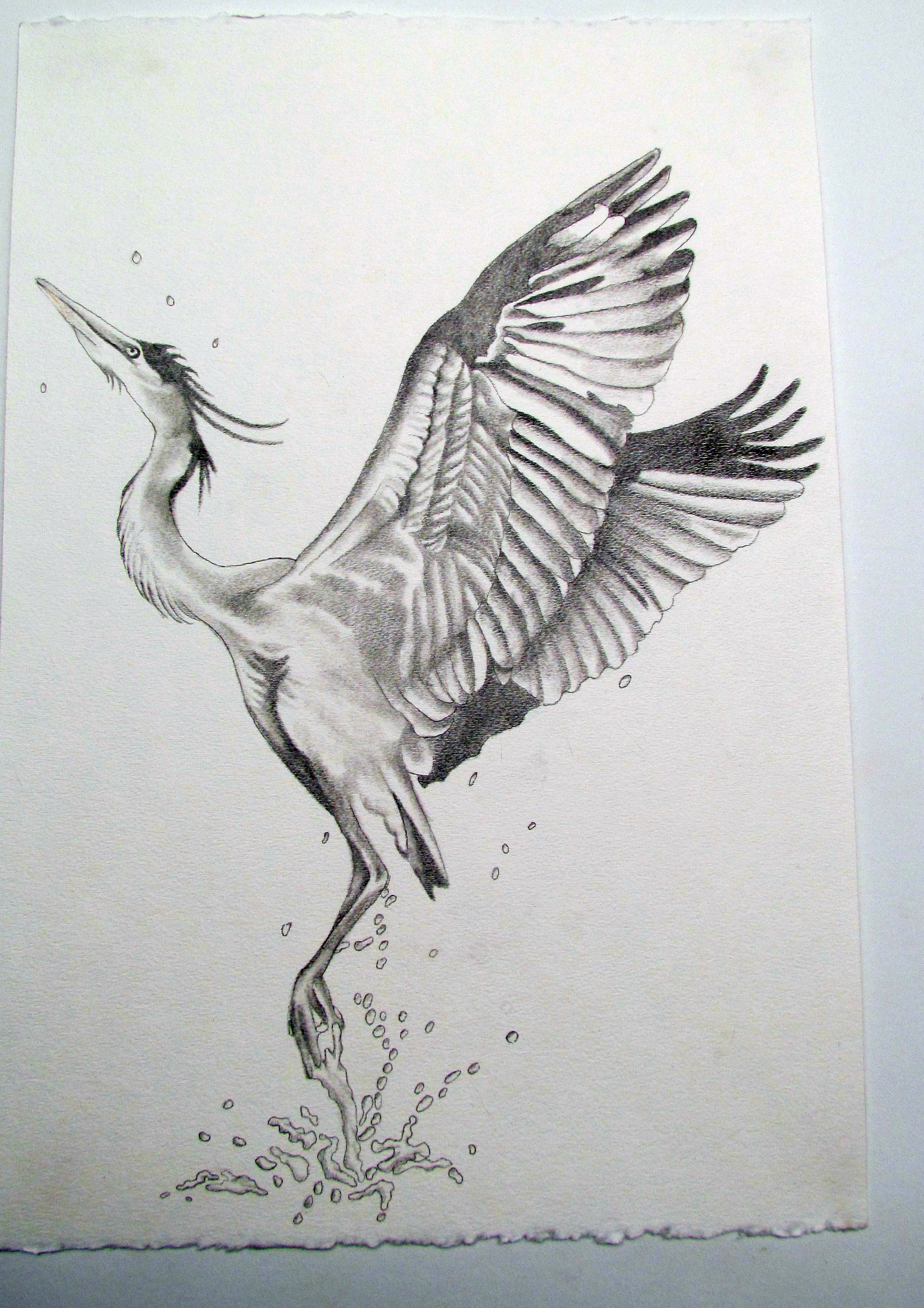 Japanese Crane clipart  ornamented Plate sketch with