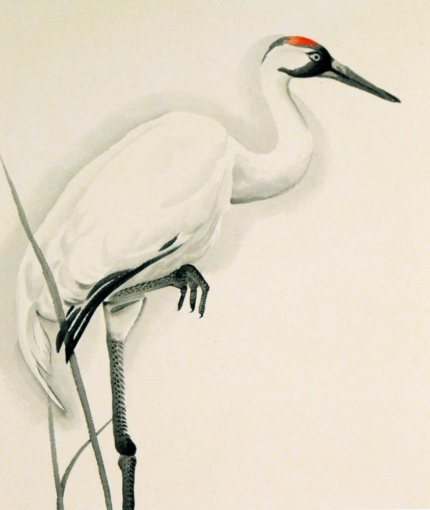 Japanese Crane clipart Pinterest Google drawing drawing Search