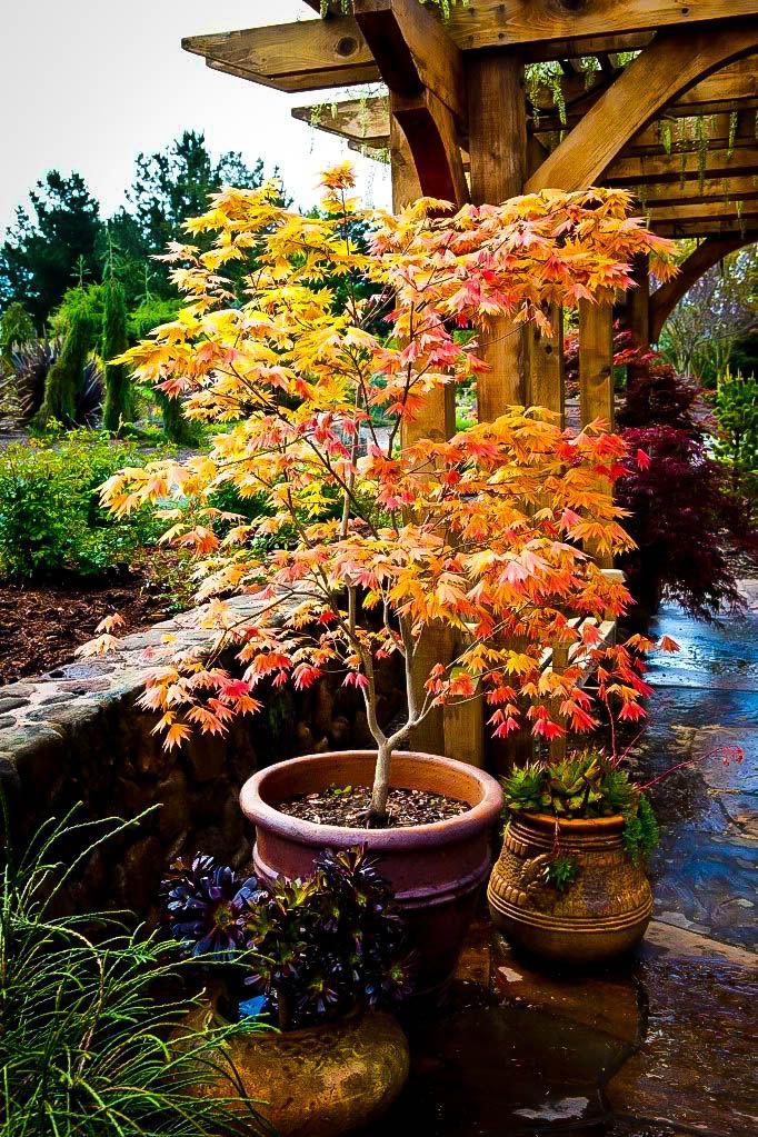 Japanese Garden clipart maple tree Autumn Pinterest Japanese best Orders