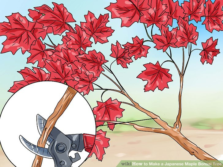 Japanese Garden clipart maple tree Titled a Japanese Make Tree