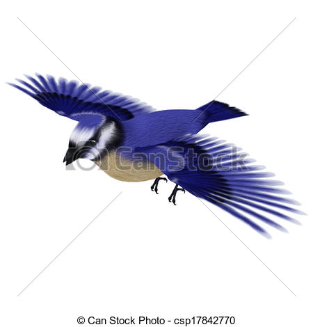 Blue Jay clipart flight drawing  a Florida 3D of