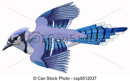 Blue Jay clipart flight drawing  Blue Blue of cristata