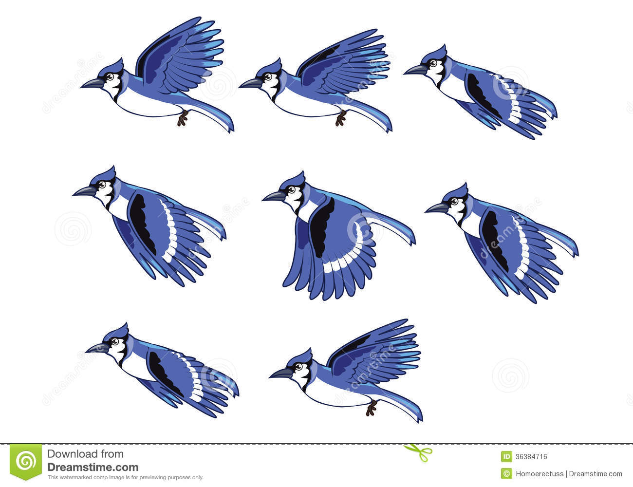 Blue Jay clipart flight drawing Royalty Free  Sequence Stock