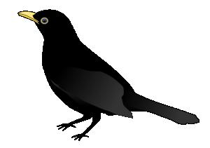Jet clipart blackbird Clip Blackbird Download Blackbird Art