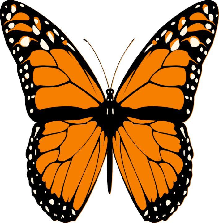 Bug clipart orange butterfly ART CLIP caterpillars Butterflies Monarch