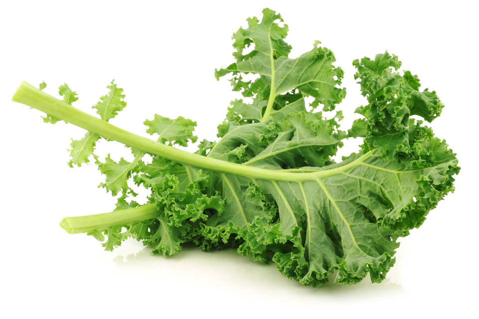 Kale clipart vegatable  Kale Pack) (200g Curly