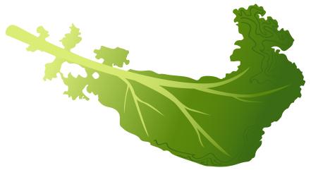 Kale clipart vegatable Kale Download Nutrition and jpg