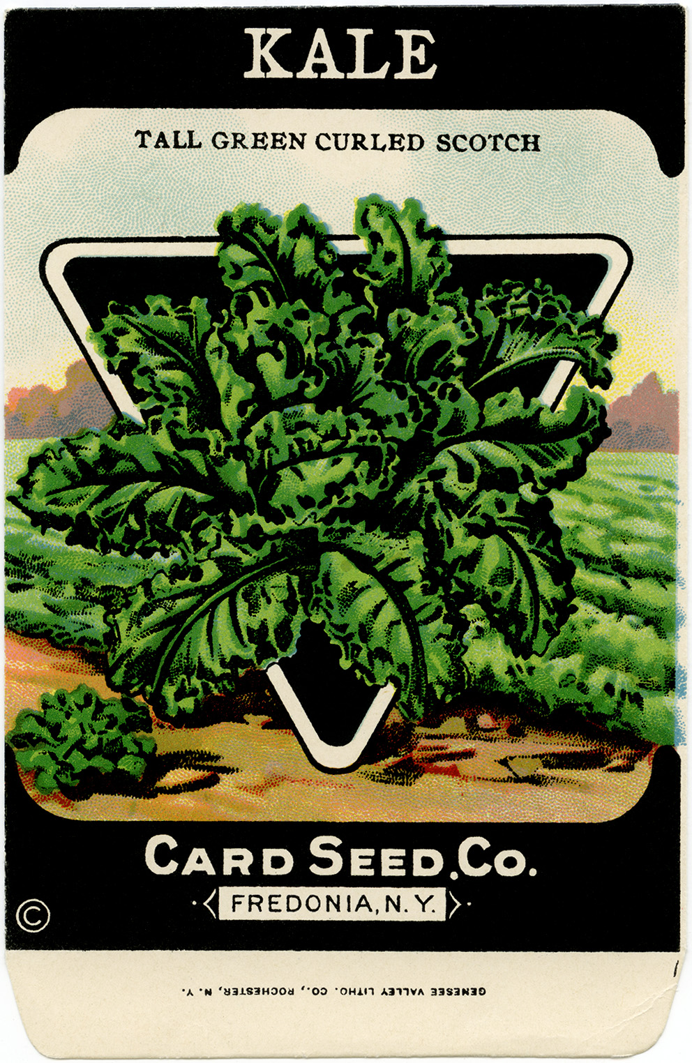 Kale clipart vegatable Package clip co fashioned card
