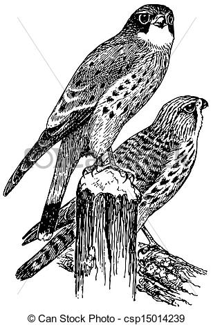 Kestrel clipart Kestrel silhouette Birds csp6295333 of