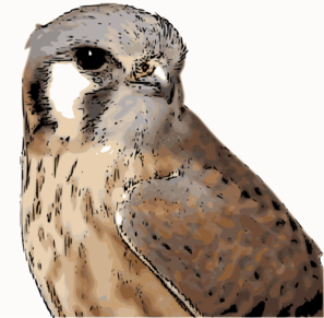 Kestrel clipart Com  at Clip vector