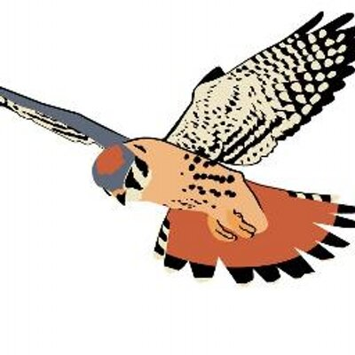 Kestrel clipart Kestrel Partnership Partnership Kestrel Twitter